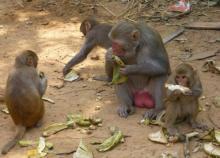 Monkey-Banana